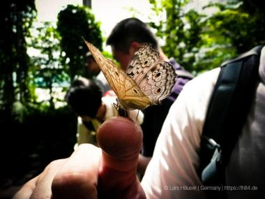 Butterfly Garden at Changi Airport Singapore