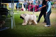 Darwin Royal Show 2012