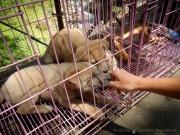 25_Java_Indonesien_sterne_4_DSCN0242