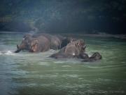 26_Sumatra_Indonesien_sterne_4_DSCN0621