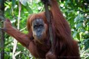 26_Sumatra_Indonesien_sterne_4_DSC_0195