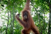 26_Sumatra_Indonesien_sterne_4_DSC_0248