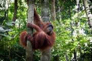 26_Sumatra_Indonesien_sterne_4_DSC_0254